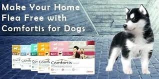 comfortis flea pill for dogs. Comfortis Flea Pill For Cats Dogs Side Effects
