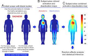 Bodily Maps Of Emotions Pnas