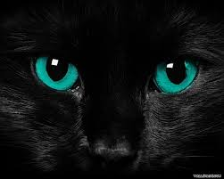 free scary cat eyes resolution