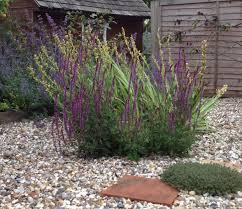 Small Picture Garden Design Garden Design with Gravel Garden on Pinterest with