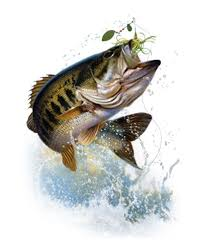 largemouth bass jumping. Delighful Largemouth Bass Fish Jumping  Google Search In Largemouth Bass Jumping H