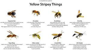 Wasp Identification Chart A Comprehensive Guide To Yellow Stripey Things