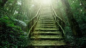 heaven nature rainforest stairways wallpaper