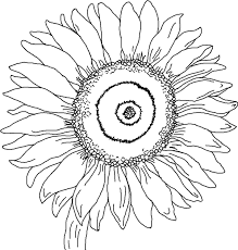 Small Picture Free Printable Sunflower Coloring Pages For Kids