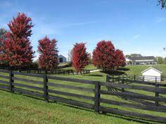 farm fence ideas. Plain Farm Farm Fencing  Google Search To Farm Fence Ideas N