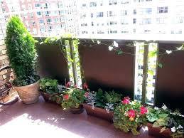 home depot plants winter medium size of outdoor balcony winter plants balconies growing vegetables flowers high home depot plants winter
