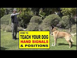 How To Teach Hand Signals And Positions To Your Dog Dog
