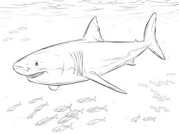 Small Picture Great White Shark with Pilot Fishes coloring page Free Printable