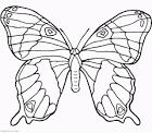 Бабочка красивая раскраска