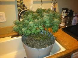 third grow