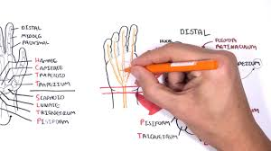 Finger Rom Chart Wrist And Hand Physiopedia