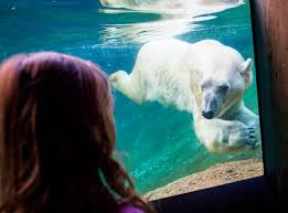 Oldest known polar bear dies at Point Defiance Zoo in Tacoma | Tacoma News  Tribune