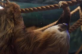 oklahoma city zoo the explorer in you hero sloth
