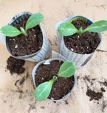 compostable newsprint seed starting