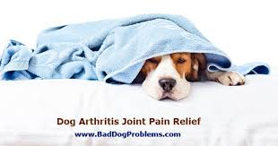 safe natural pain relief for dogs