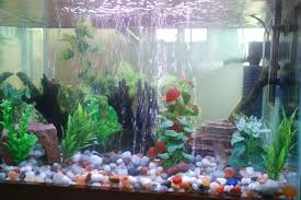 indianaquariumhobbyist munity view topic self introduction