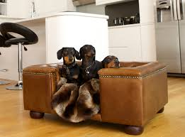 fancy pet furniture. Accessories Fancy Pet Furniture R