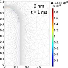 A Numerical Model Of Electroporation In Bacteria