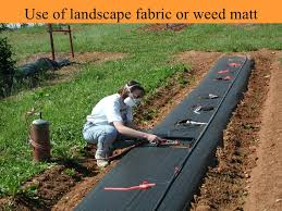 using landscape fabric