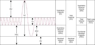 Breathing Capacity Biology For Majors Ii