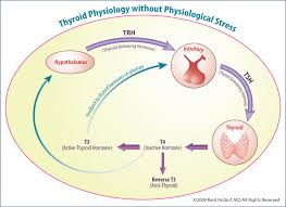 Thyroid Conversion Chart Central Drugs Peripheral Thyroid Hormone Conversion And Its Impact On Tsh