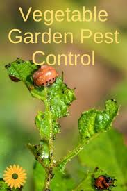 learn how to control vegetable garden pests naturally