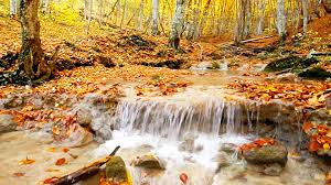 Beautiful Pictures Of Nature Relaxing Nature Sounds Beautiful Forest River Hd Youtube