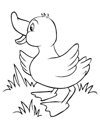 Small Picture Duck Coloring Pages GetColoringPagescom