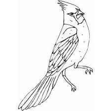 Small Picture Angry Cardinal Coloring Page