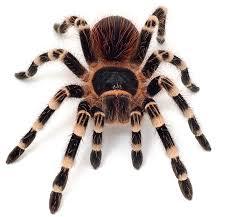 Znalezione obrazy dla zapytania pająki gif