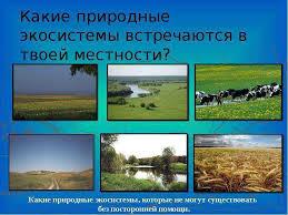 Природные И Искусственные Экосистемы Реферат
