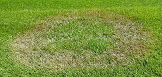 Brown Patch Disease Gro Masters Brown Patch Disease Lawn Care Prices