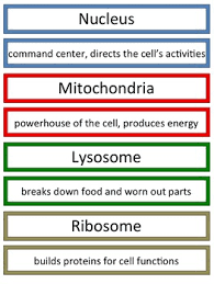 Cells And Their Functions Chart Lets Build An Animal Cell Anchor Chart