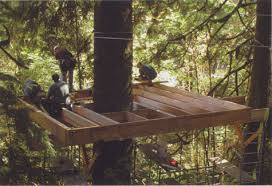 An elegant platform takes shape around the old-growth Sitka spruce.  Occasionally a tree will resist a building project, but this magnificent  specimen ...