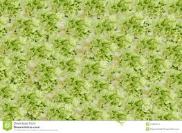 Flower Wall Flower Wall Stock Images Image 24844914