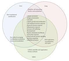Venn Diagram Virginia Plan And New Jersey Plan Venn Diagram Showing The Overlap Of Major Functions Of Genes