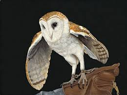 Barn Owl - Painting Art by Priscilla Baldwin