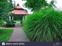 Tall Decorative Grass Tall Ornamental Grass And Gazebo In Avon Connecticut New England