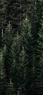 Tree wallpaper iphone ...
