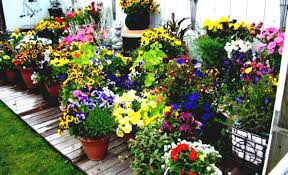 Small Picture Container Gardening Ideas Uk