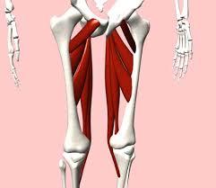 「股関節内転」の画像検索結果