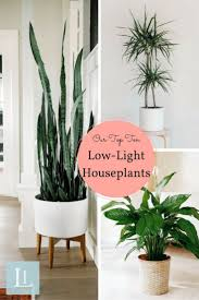 Best Indoor Plant Decor Ideas On Pinterest Plants And House Low Light  Houseplants Houseplant