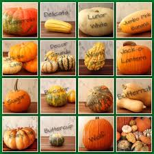 Gourd Identification Chart Image Result For Gourd Identification Chart Pumpkin Squash