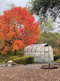 Raven Hill Ranch - Great fall color this year.   Facebook