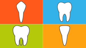 The 4 Types Of Teeth And How They Function Everyday Health
