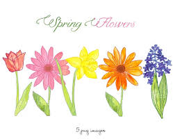 spring flowers clipart images