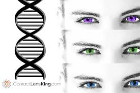 Eye Color Probability Chart What Determines Eye Color Is It Genetics