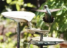 Small Picture Attract Hummingbirds Design Your Hummingbird Garden California