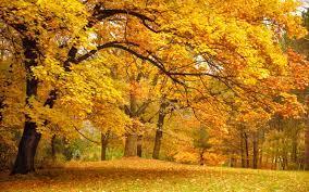 秋季高清壁纸| 桌面背景| 2560x1600