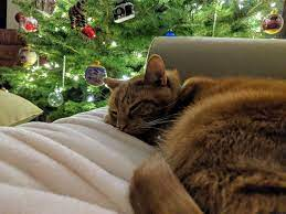 Mack on New Year's Eve | Mack and I slept on the couch by th… | Flickr